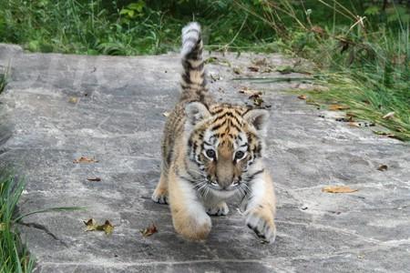 Ein Schwimmbecken Für Kleine Tiger Tschunas Blog